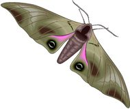 Moth. Illustration Stock Images