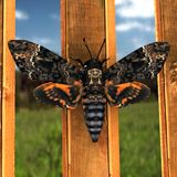 Moth. 3d rendering of a moth Stock Photos