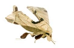 Moth Stock Photos