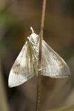 Moth. The close-up of abdominal of moth royalty free stock images