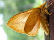 Moth. The fluffy Moth creeps on tree trunk Royalty Free Stock Photo