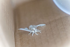 Moth. A white moth in a box Royalty Free Stock Photography
