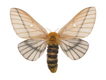 Moth. Photograph of a moth isolated stock image