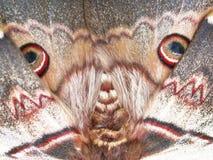 Free Moth Royalty Free Stock Photos - 62609398