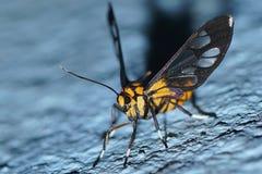 Moth. Animal nature night macro stock photography