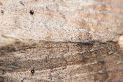 Moth background Stock Images