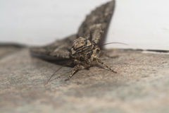 Moth Stock Images