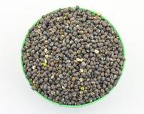 Moth Beans  Vigna aconitifolia Royalty Free Stock Photos