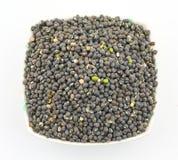 Moth Beans  Vigna aconitifolia Stock Photography