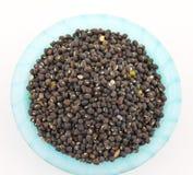 Moth Beans  Vigna aconitifolia Royalty Free Stock Photography