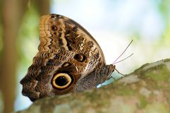 Moth on Branch Royalty Free Stock Photos