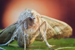 Moth close-up with color background Stock Photo