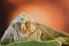 Moth close-up with color background Royalty Free Stock Photography