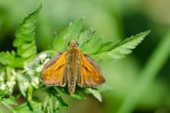 Moth Stock Image