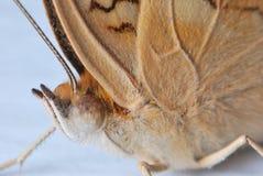 Moth Eye royalty free stock photos