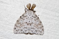 Moth. With fabric texture like delta shaped wings resting on a wall stock image