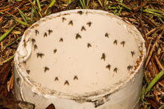 Moth Flies. Congregating in a drain pipe in Florida royalty free stock image