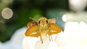 Moth in Flower Royalty Free Stock Photography