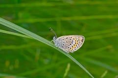 Moth on green haulm. Royalty Free Stock Photos