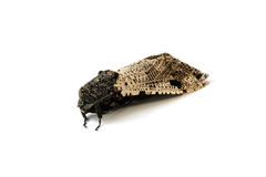 Moth . Stock Photography