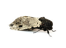 Moth . Stock Images
