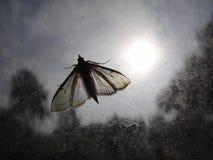 Moth. A moth illuminated bright sun Stock Photo