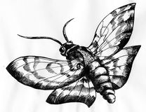 Moth ink drawing Royalty Free Stock Photography