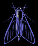 Moth insect x-ray Royalty Free Stock Photography