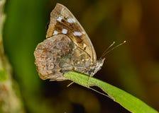 Moth on leaf extreme close up photo. Photo of Moth on leaf extreme close up photo stock photo