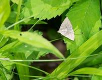 Moth on leaf Stock Image