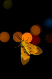 Moth at night. Underside of a moth at night Royalty Free Stock Photos