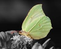Moth at night Royalty Free Stock Image