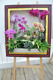 Moth orchid in the frame Stock Photo