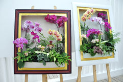 Moth orchid in the frame Royalty Free Stock Image