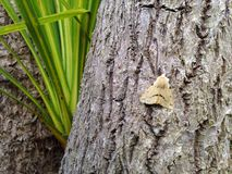 Moth on Palm Tree. A small moth resting on a palm tree Royalty Free Stock Photo
