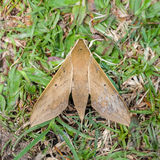 Moth park on the ground Royalty Free Stock Photos
