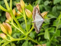 Moth perched on the branches of a plant stock photos