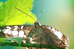 Moth and pollen royalty free stock photography