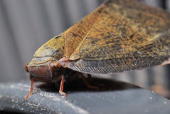 Moth Resting. A side view taken on a moth at rest royalty free stock photography