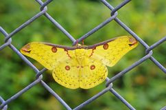 Moth resting on the grid fence Royalty Free Stock Photography