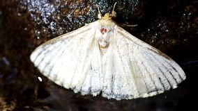 Moth on the rock in the stream stock video footage