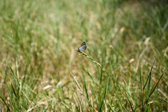 Moth. A moth sat on a blade of grass Royalty Free Stock Photography