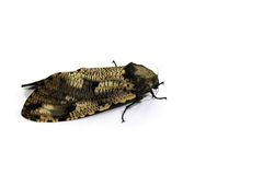 Moth Stock Image