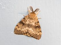 Moth sitting still royalty free stock photos