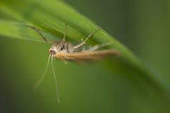 Moth Royalty Free Stock Photo