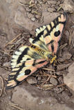 Moth on Trail Stock Photography