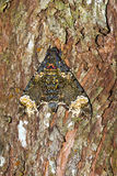 Moth tree camouflage Stock Photos