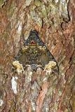 Moth tree camouflage Stock Photos