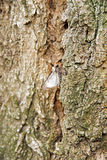 Moth on a trunk Stock Photo