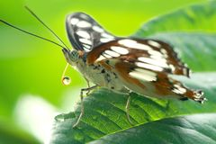 Moth with water drops royalty free stock image